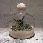 imo market TERRARIUM GARDEN B105000yen