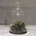 imo market Bottle Garden S9450yen