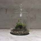imo market Bottle Garden M12600yen