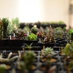 WONDER PLANTS EXHIBITION 2016